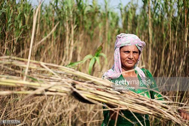 Women harvesting sorghum crop