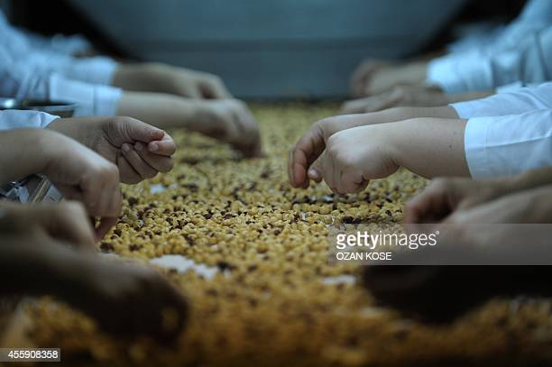 Women hazelnut workers look for bad nuts on September 122014 in Trabzon Prices of Turkish hazelnuts have surged after cold late winter weather and...
