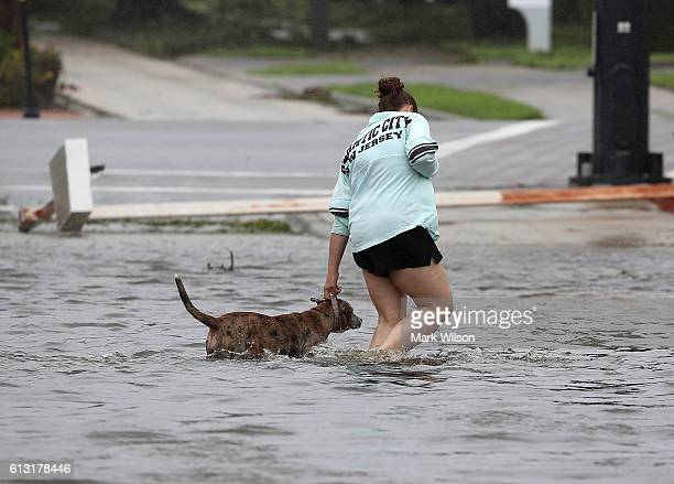 A women helps a dog navigate through Hurricane Matthew's flood waters October 7 2016 on Port Orange Florida Hurricane Matthew passed the area...