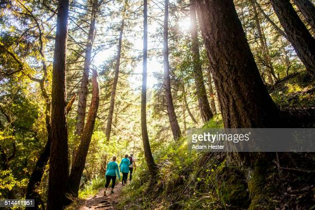 women hiking in sunny forest - muir woods stock photos and pictures