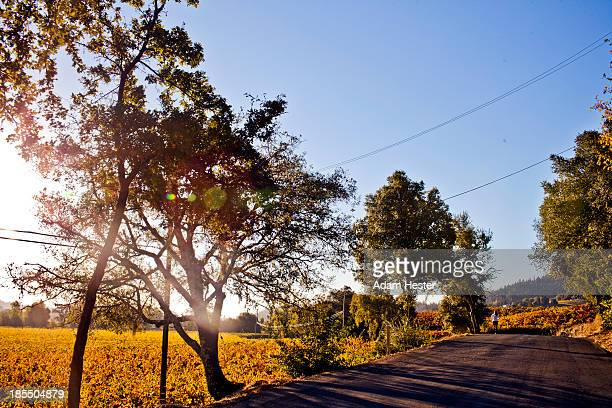 A women jogging on a rural road in Sonoma.