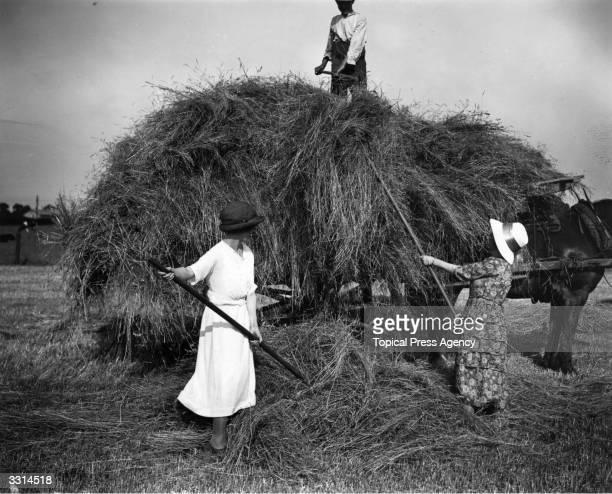 Women loading hay on a farm in Bedford.