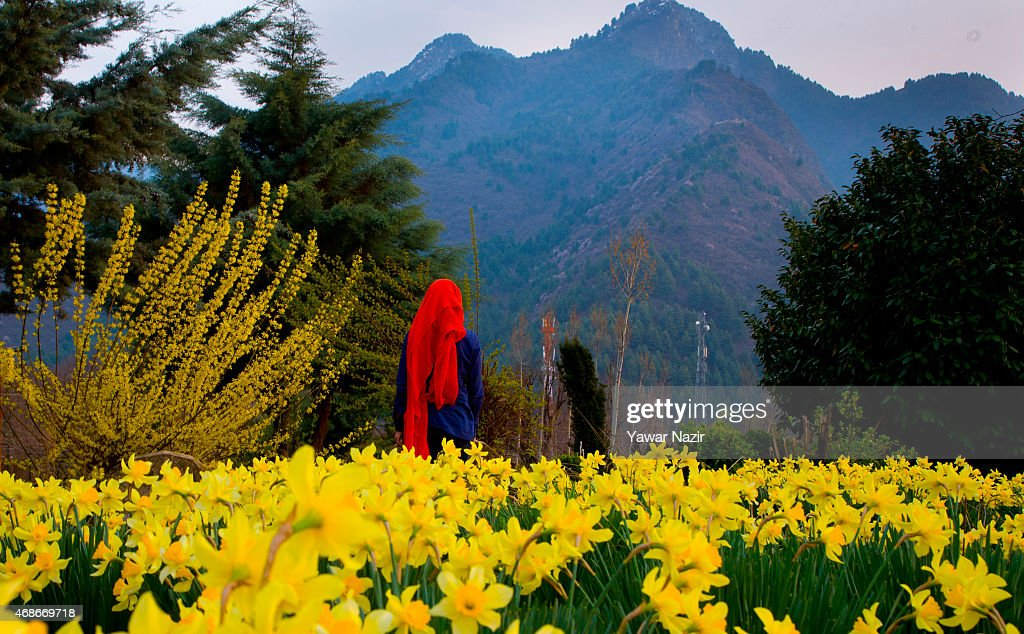 Flowers in bloom at outset of spring in kashmir photos and images a women look towards flowers during spring season on april 05 2015 in srinagar mightylinksfo