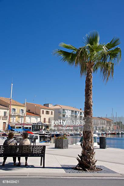 women on a bench near a palm tree, on the quay of meze harbor, herault, languedoc roussillon region, france, europe - palm harbor stock-fotos und bilder
