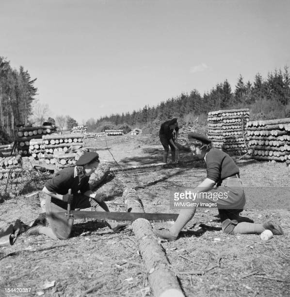 Women On The Home Front 1939 - 1945, The Women's Land Army : Two Land Army girls sawing timber into lengths for pit props at the WLA training centre...