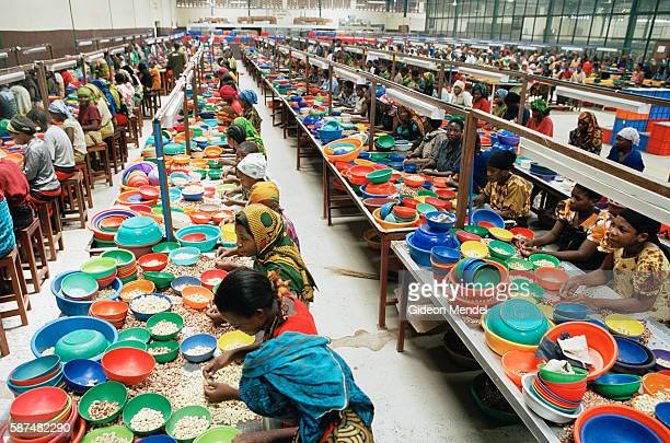 Women peel and grade cashew nuts by hand at a large processing factory in Mtwara, which employs 2,400 women. The pods are steamed, then the nut is...