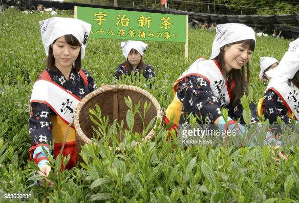 Women pick tea leaf sprouts in Uji Kyoto a production area of luxury Uji green tea in an event to promote the beverage on May 2 the 88th day of...