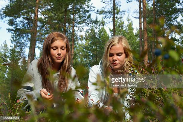 Women picking berries in forest