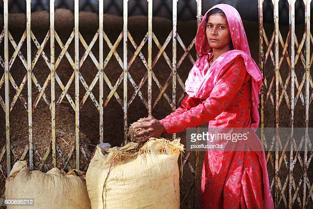 women picking shaff for domestic cattle - salwar kameez stock pictures, royalty-free photos & images