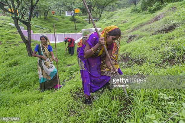 Women plant neem and other seeds as part of a forestation project to stop rainwater flows in Dewas Madhya Pradesh India on Tuesday July 5 2016...