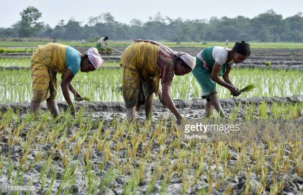Women plant rice saplings at a paddy field at Baghmara village in Baksa district of Assam, India on Monday, July 01, 2019.