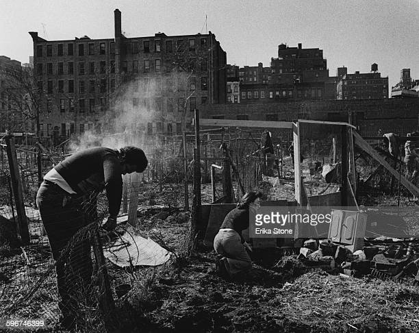 Women planting allotments on a patch of wasteground in East Harlem New York City circa 1975