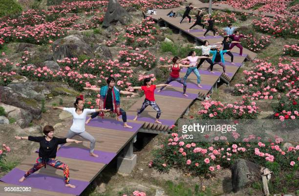 Women practice yoga at a sea of roses in Jingning She Autonomous County on May 6 2018 in Lishui Zhejiang Province of China