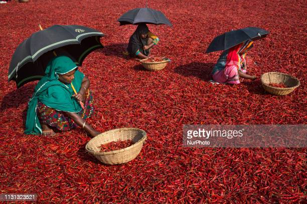 Women process and dry red chili pepper under sun near Jamuna river in Bogra Bangladesh on March 18 2019 Everyday they earn less than USD $1 after...