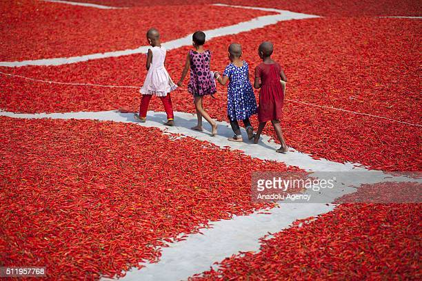 Women process and dry red chili pepper under sun near Jamuna river 240 kms northwest of Dhaka in Gaibandha Bangladesh on February 23 2016 Everyday...