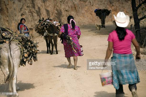 Women return from chopping firewood on February 29 2008 in the rural and impoverished town of Santa Ines de Monte The women spend the day chopping...