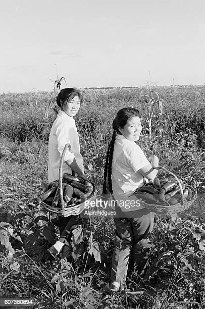 Women serving in the oil militia pick vegetables from their garden. A team of 78 young women working at the oil drilling station of Daqing, also...