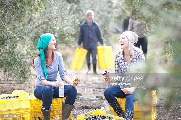 Women sitting on crates taking a break in olive grove