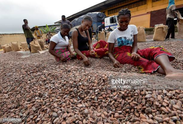 Women sort cocoa beans at a cocoa exporter's in Abidjan, on July 3, 2019. - In June key producers Ivory Coast and Ghana threatened to stop selling...