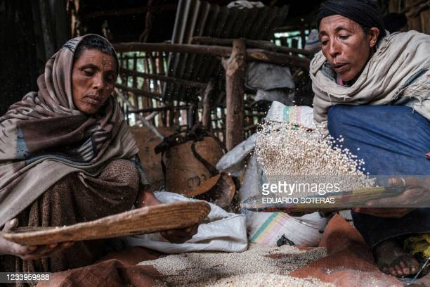 Women sort sorghum seeds in a mill in a rural area near the village of Dabat, 70 kilometres northeast from the city of Gondar, Ethiopia, on July 13,...