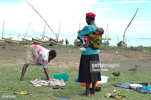 Women sort through the fish caught by the fishermen in Lake Victoria Hand crafted sail boats line the shore in the background Lake Victoria is 63000...