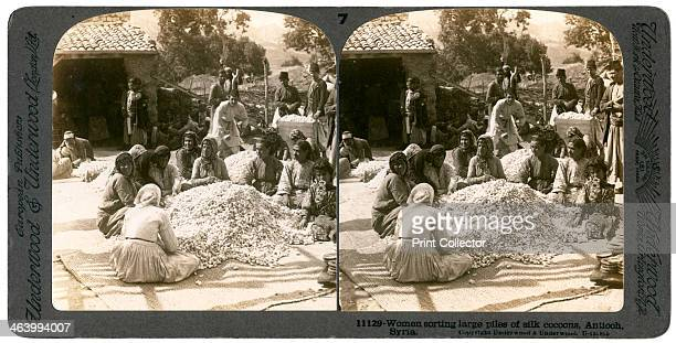 Women sorting large piles of silk cocoons Antioch Syria 1900s Stereoscopic slide