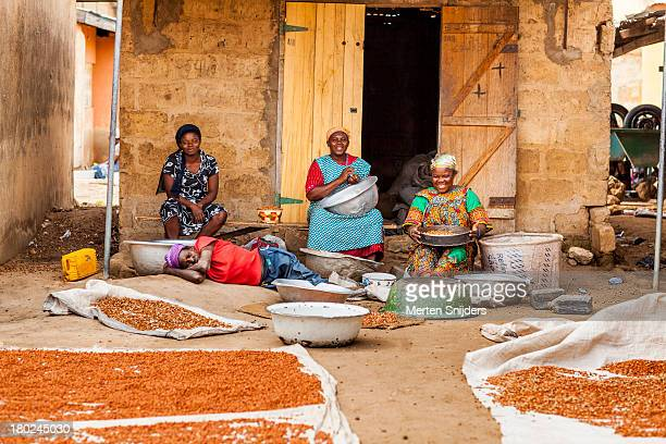 women sorting sweetcorn - merten snijders stock pictures, royalty-free photos & images