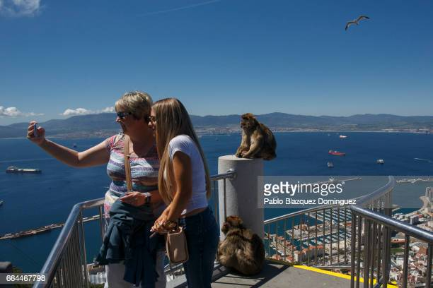 Women take a selfie as monkeys sit on the stairs at the top of Gibraltar Rock on April 4 2017 in Gibraltar Gibraltar Tensions have risen over Brexit...