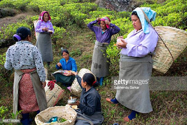 Women take break to eat in between plucking tea leaves at Makaibari tea garden Set up in 1859 off Kurseong in the Darjeeling hills the Makaibari...