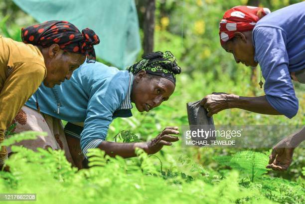 Women take care of seedlings at a nursery outside of Buee about 100km from Addis Ababa in southern Ethiopia on June 1 2020 ahead of World Environment...