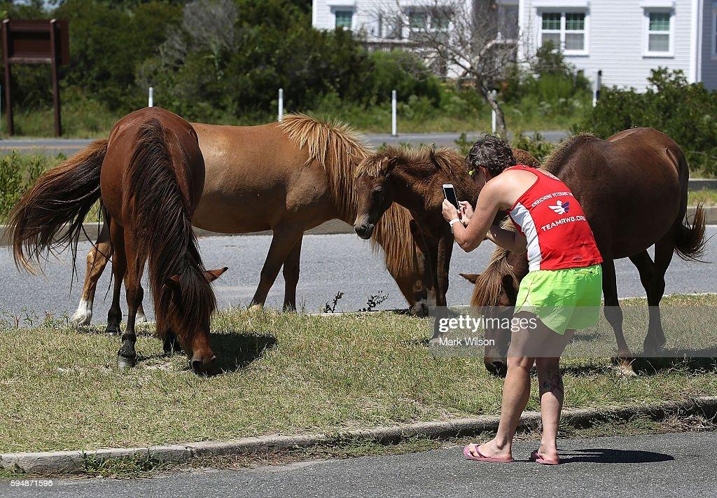 wild horses and tourists enjoy summer on assateague island photos
