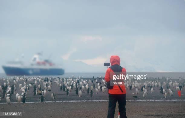 女性は南ジョージアのペンギンを見る - フォークランド諸島 ストックフォトと画像