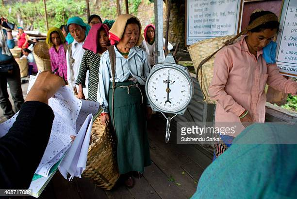 Women wait to get tea leaves they plucked weighed at Makibari tea factory Set up in 1859 off Kurseong in the Darjeeling hills the Makaibari estate is...