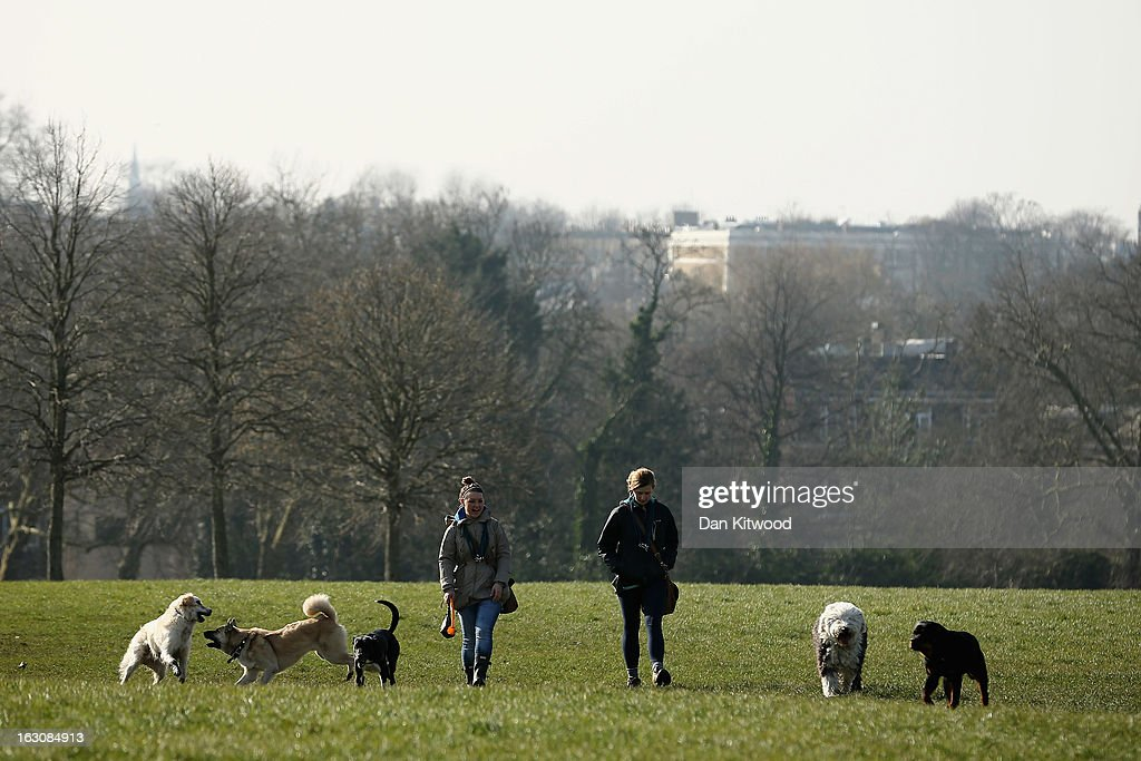 Women walk dogs in the sunshine on Primrose Hill on March 4, 2013 in London, England. The Met office has predicted the warmest day of the year tomorrow with a top temperature of 15 degrees in some parts of the country.