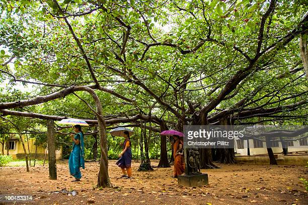 Women walk under an ancient Banyan tree.