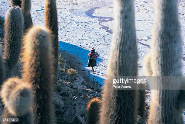 Women walking across salar, view through cacti