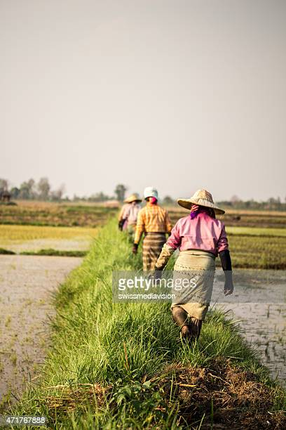 Women walking between rice fields