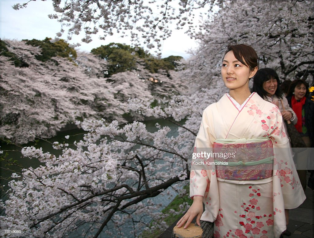 Cherry Blossoms Bloom In Japan : News Photo