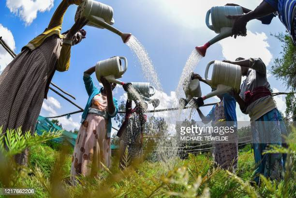 Women water seedlings at a nursery outside of Buee about 100km from Addis Ababa in southern Ethiopia on June 1 2020 ahead of World Environment Day
