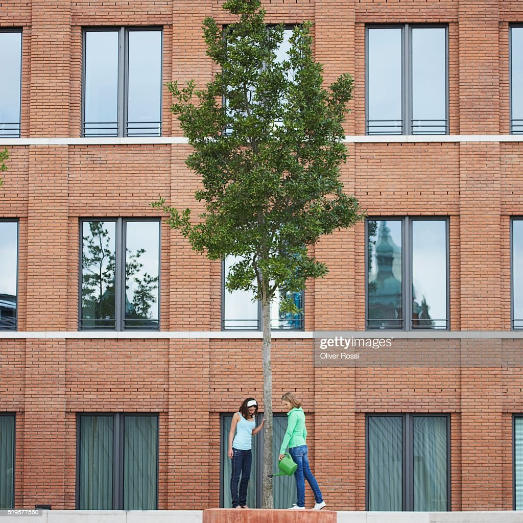 Women Watering a Tree : Stock Photo