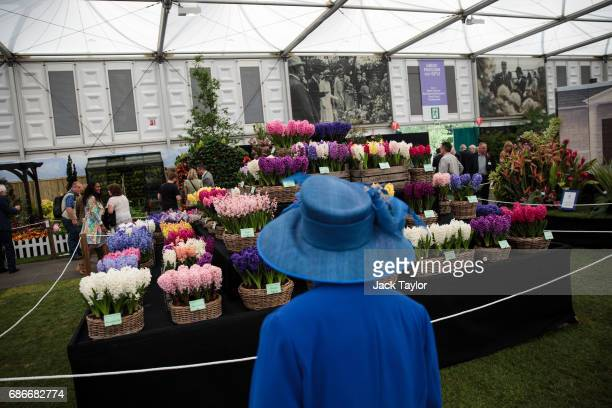 A women wearing a blue hat looks at the floral displays at the Chelsea Flower Show on May 22 2017 in London England The prestigious Chelsea Flower...