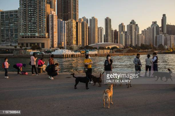 Women wearing masks walk their dogs on a pier in Hong Kong on January 30 as a preventative measure after a virus outbreak which began in the Chinese...