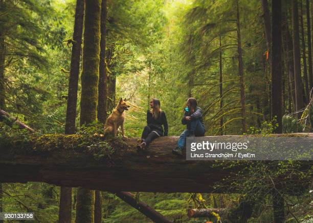 Women With Dog Sitting On Tree Trunk In Forest