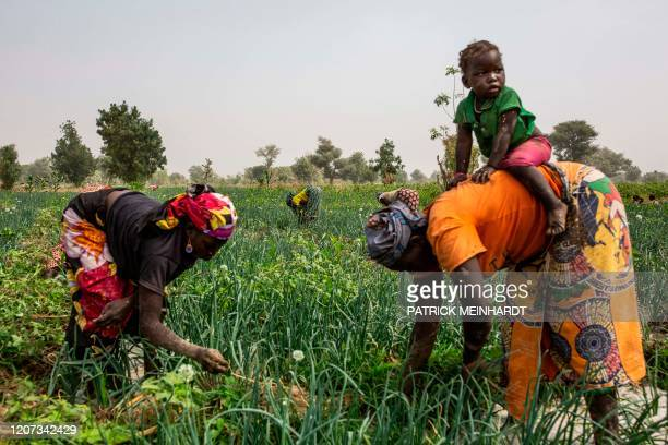 Women work at an onion field near Gazawa on March 7, 2020. - The Far North is the region in Cameroon with the biggest population, also one of the...