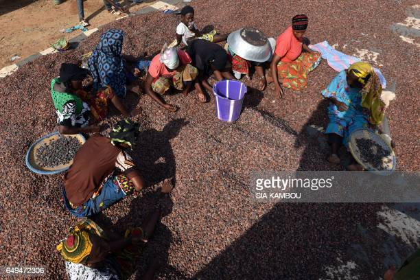 Women work in a cacao beans workshop in Soubre on March 6 2017 / AFP PHOTO / Sia KAMBOU