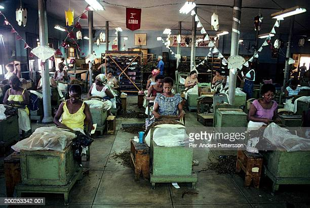 women work in a cigar factory in havana, cuba - per-anders pettersson stock pictures, royalty-free photos & images