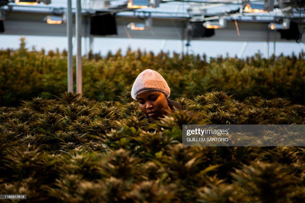 LESOTHO-ECONOMY-DRUGS-HEALTH-FARMING : News Photo