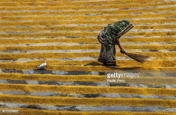 Women workers are responsible for doing more laborious job than their male counterparts such as drying and husking paddy and packing the husked rice...