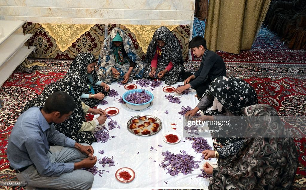 Women workers pick the saffron, one of the world's most expensive spices, from the flower of Crocus sativus at a workshop in Zaveh, a village 160 kilometers away from Razavi Khorasan Province, Iran on October 28, 2016.