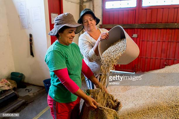 Women working at a Colombian coffee farm
